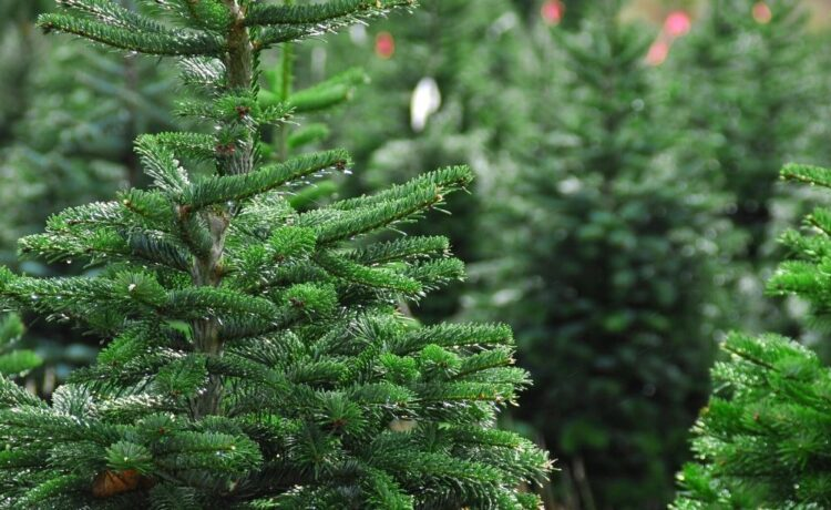 Tips on How to Start a Successful Tree Farm Business
