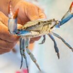 Top Types of Shellfish To Catch in Florida During the Fall