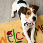 Welcoming Your Furry Friend: Top Ways To Pet-Proof Your Home