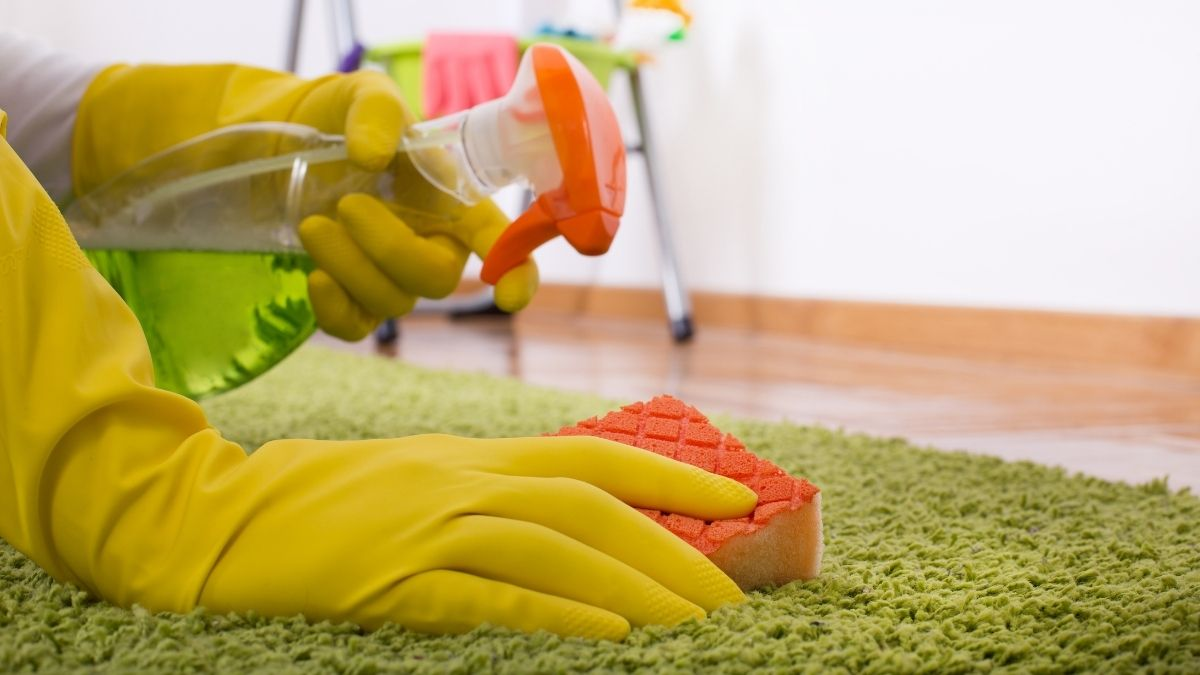 How To Clean Up Dog Poop in Your House