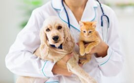 How Veterinarians Can Serve their Community