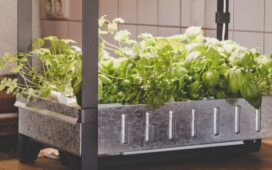Hydroponic Gardening Tips for Beginners