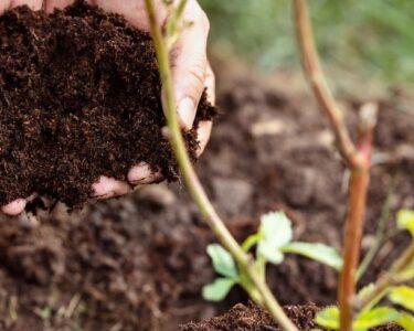 The Best Methods To Help Your Garden Bloom